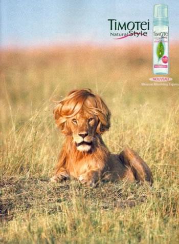 Lion Timotei
